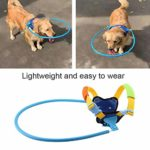 Blind Dog Harness and Ring Review