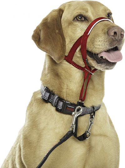 Company of Animals Halti Head Collar for Dogs, Size 3, Red 6